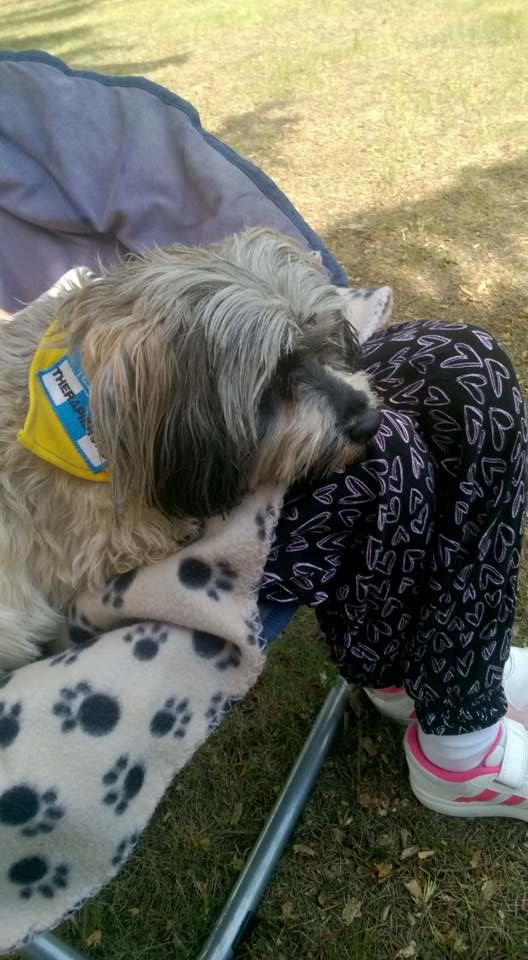 Therapie-Hunde-Einsatz, Havaneser-Hündin Bella auf dem Schoß eines Klienten