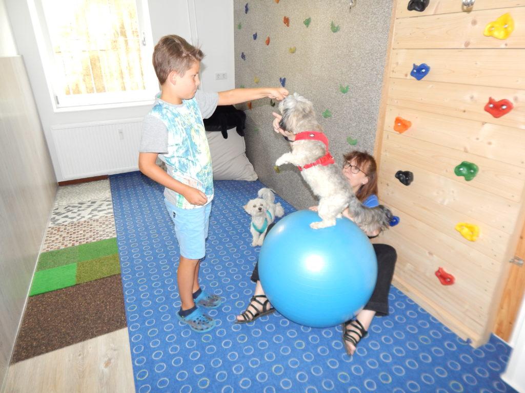 Therapie-Hunde-Einsatz, Hündin Bella auf einem Ball, Hund Otto daneben